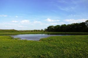 Beautiful Ranch with Pond and Improved Pasture - Madison County TX