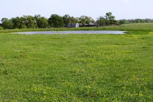 Beautiful Ranch with Pond and Improved Pasture in Madison, TX (3 of 4)
