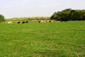 Beautiful Ranch with Pond and Improved Pasture in Madison, TX (4 of 4)
