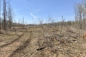 The Lake Demopolis Hunting and Timber Investment  in Hale, AL (6 of 10)