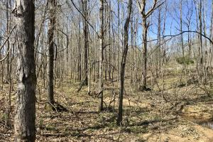 The Lake Demopolis Hunting and Timber Investment  in Hale, AL (8 of 10)