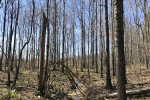 The Lake Demopolis Hunting and Timber Investment  in Hale, AL (5 of 10)