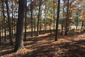 Sunset Road Hunting and Timber Investment - Franklin County AL