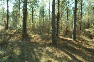Greene County Timberland and Hunting Investment - Greene County AL