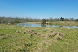 Shepard Road Farm Tract in Barbour, AL (2 of 6)