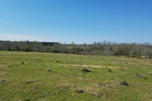 Shepard Road Farm Tract in Barbour, AL (3 of 6)