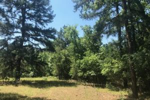 Rolling Terrain, Timber, near Pine Dunes Resort and Lake Frankston   - Anderson County TX