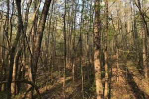 Highway 20 Development Opportunity - Anderson County SC
