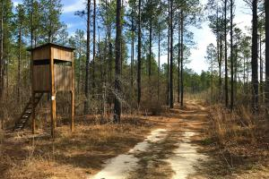Veterans Rd Hunting and Timberland - Barnwell County SC