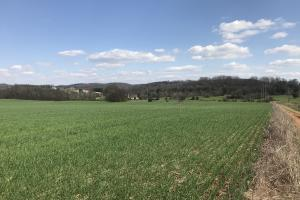 Loudon Tennessee Farmland in Loudon, TN (7 of 12)