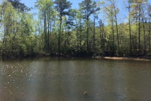Possum Creek Hunting and Timber Investment  - Perry County AL