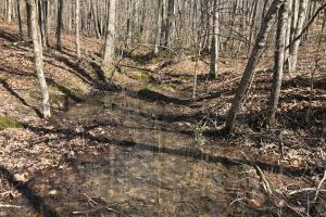 East Tennessee Wooded Hunting & Recreation Property in Roane, TN (3 of 12)