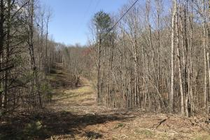 East Tennessee Wooded Hunting & Recreation Property in Roane, TN (7 of 12)