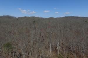 East Tennessee Wooded Hunting & Recreation Property in Roane, TN (6 of 12)