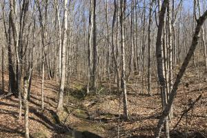 East Tennessee Wooded Hunting & Recreation Property in Roane, TN (10 of 12)