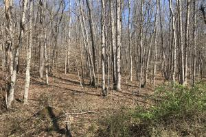 East Tennessee Wooded Hunting & Recreation Property in Roane, TN (11 of 12)