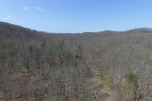East Tennessee Wooded Hunting & Recreation Property in Roane, TN (8 of 12)