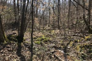 East Tennessee Wooded Hunting & Recreation Property in Roane, TN (9 of 12)