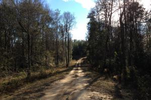 The Red Hill Creek & Camp Hwy 225 Tract in Baldwin, AL (47 of 49)