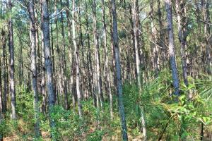 Rocky Point Hunting and Timber Investment in Pender, NC (18 of 22)