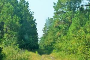 Rocky Point Hunting and Timber Investment in Pender, NC (19 of 22)