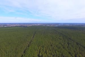 Rocky Point Hunting and Timber Investment in Pender, NC (5 of 22)