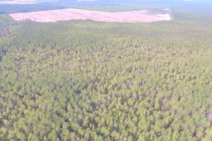 Rocky Point Hunting and Timber Investment in Pender, NC (6 of 22)