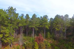 Rocky Point Hunting and Timber Investment in Pender, NC (9 of 22)