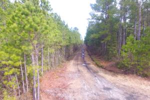 Rocky Point Hunting and Timber Investment in Pender, NC (11 of 22)