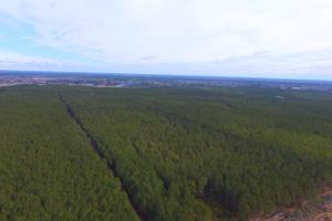 Rocky Point Hunting and Timber Investment in Pender, NC (15 of 22)