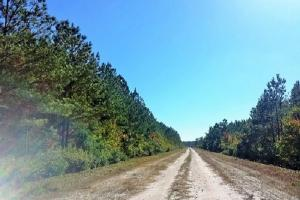 Rocky Point Hunting and Timber Investment in Pender, NC (14 of 22)