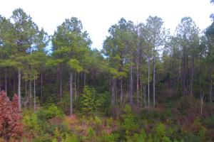 Rocky Point Hunting and Timber Investment in Pender, NC (12 of 22)