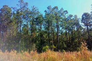 Rocky Point Hunting and Timber Investment in Pender, NC (21 of 22)