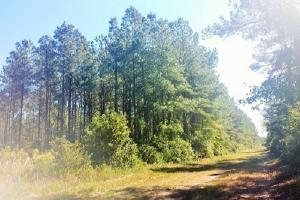 Rocky Point Hunting and Timber Investment in Pender, NC (17 of 22)