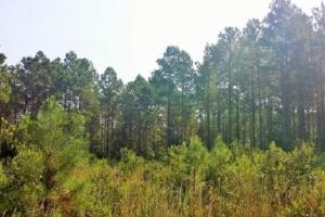 Rocky Point Hunting and Timber Investment in Pender, NC (8 of 22)