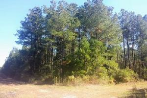 Rocky Point Hunting and Timber Investment in Pender, NC (16 of 22)