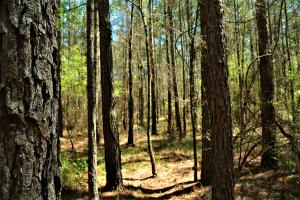 Monmouth Timber Investment and Hunting Tract - Jefferson County AL