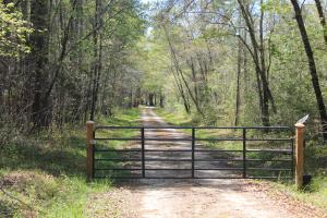 40 Acre Farm National Forest - Berkeley County SC