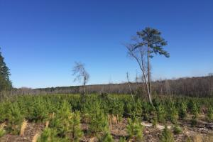 Hunts Mill Timber Investment in Chesterfield, SC (11 of 13)
