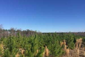 Hunts Mill Timber Investment in Chesterfield, SC (6 of 13)