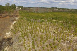 Hunts Mill Timber Investment in Chesterfield, SC (12 of 13)