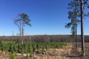 Hunts Mill Timber Investment in Chesterfield, SC (13 of 13)