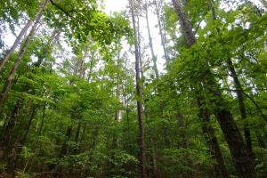 40 Acres Timber and Hunting Adjoining Cherokee WMA - Conway County AR