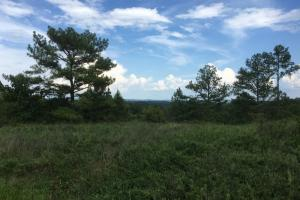 Sardis Road Development and Hunting Tract - Jefferson County AL