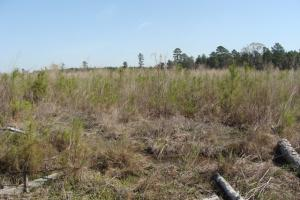 Deer Hunting Tract with Recently Planted Pine - Bradley County AR