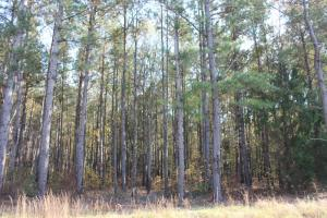 Bonneau Ridge 6.75 +/- Acres - Berkeley County SC