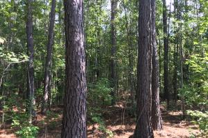 Bonneau Ridge 5 +/- Acres - Berkeley County SC