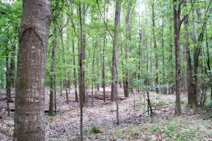 <p>land for sale in al,lot for sale in al,waterfront land for sale in al</p>