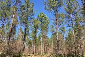 land for sale in al, recreational land for sale in al, development land for sale in al (6 of 11)