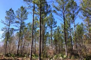 land for sale in al, recreational land for sale in al, development land for sale in al (10 of 11)